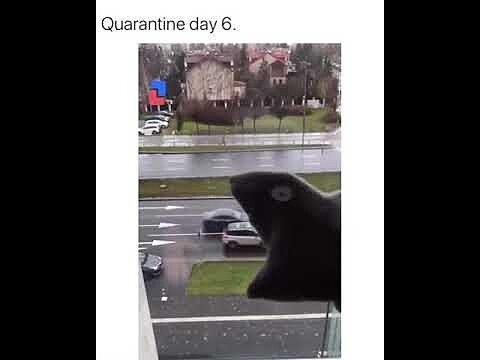 [Fun Video] When you sit at home due to quarantine (Pac-Man)