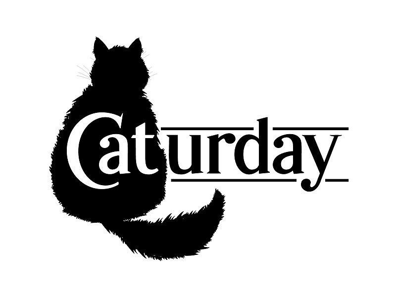 [Fun Video] Caturday Gif